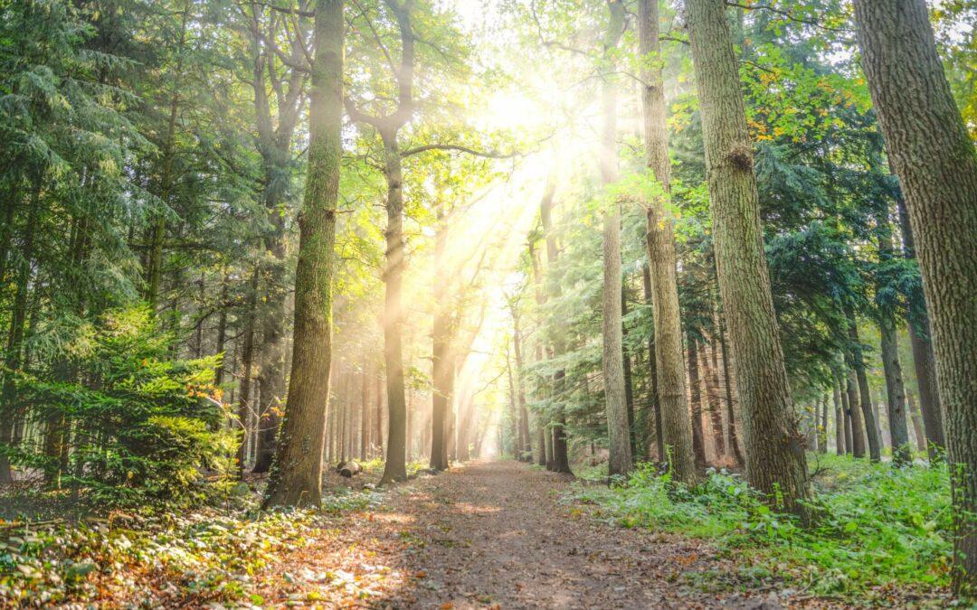 Walk Toward Resilience